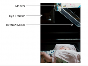 Baby looking at monitor with eye tracker and infrared mirror